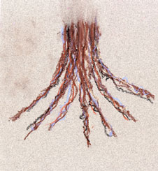 drawing of roots